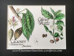 Cacaoyer-Caféier